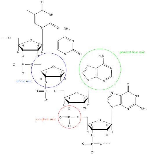 Macromolecule diagram