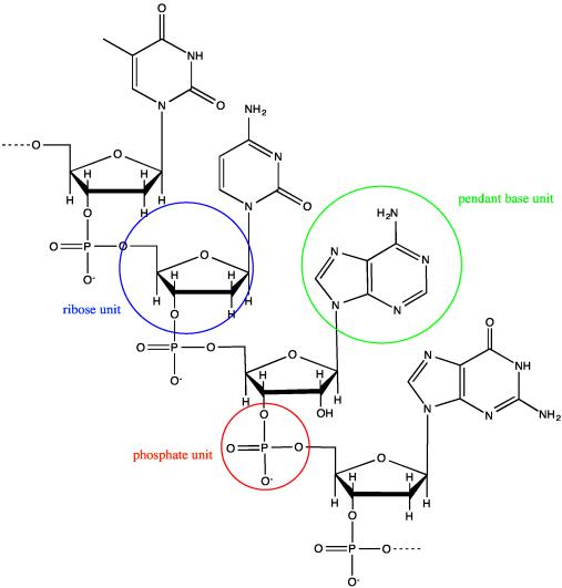 structure  u0026 reactivity  macromolecules