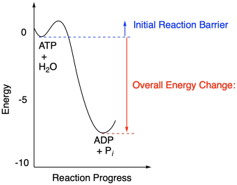 Reaction energy ace energy 4 energy the reaction barriers of reactions influence how quickly reactions happen high barriers slow reactions down a pooptronica