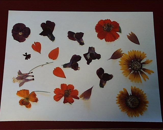 Pressing Flowers Csb Sju Saint Johns Community Garden Society