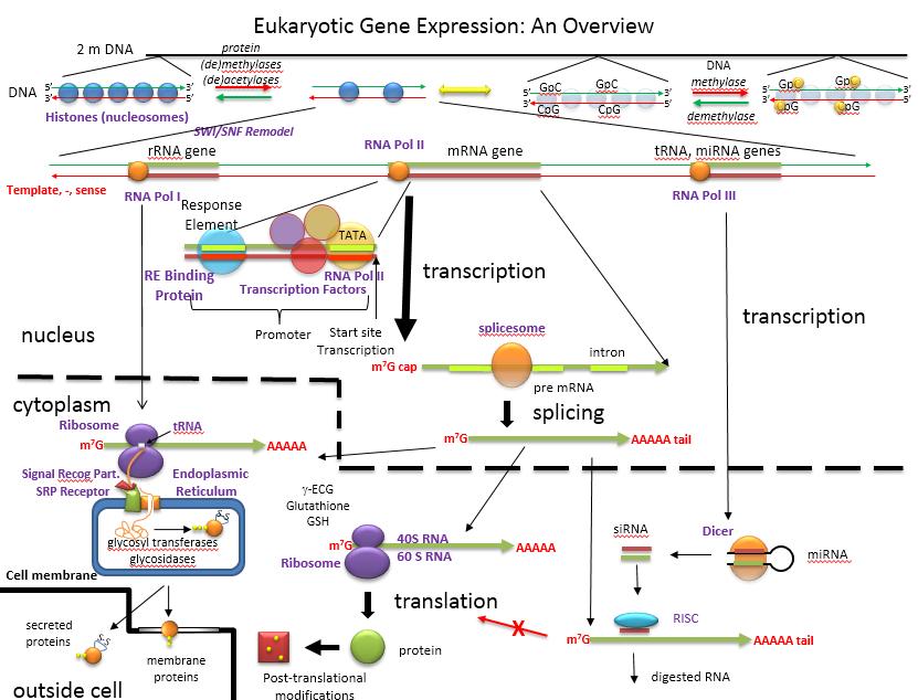 explain various methods to identify the mutation pdf