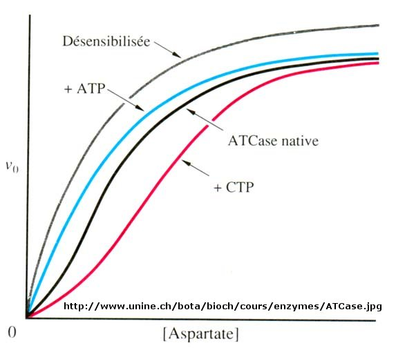 BC Online: 6D - More Complicated Enzymes