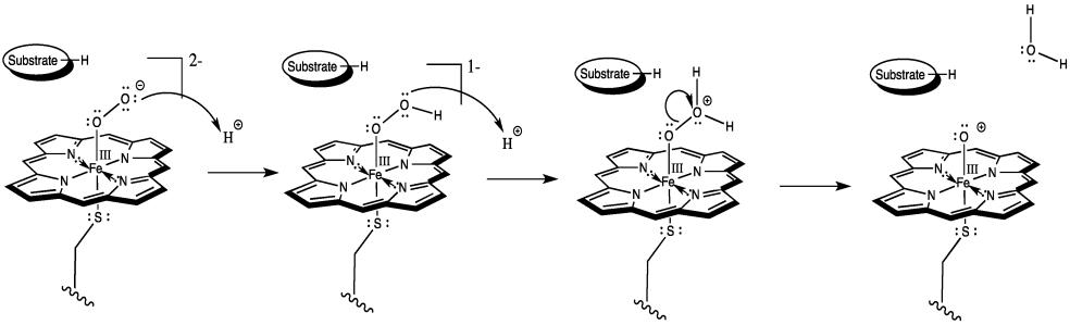 Reactivity Oxygen Reduction