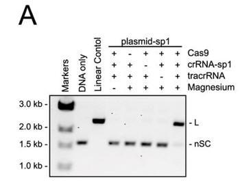 CRISPR_FIG3A