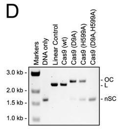 CRISPR_FIG3D
