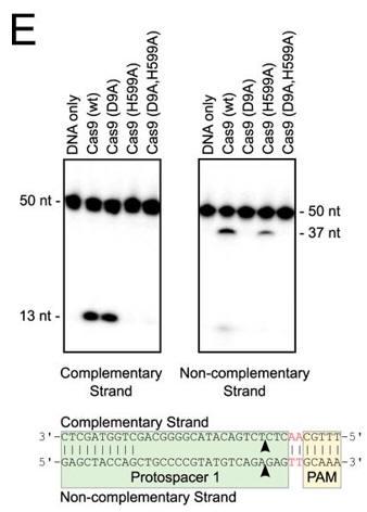CRISPR_FIG3E