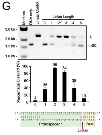 CRISPR_FIG3G