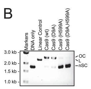 CRISPR_FIG4B