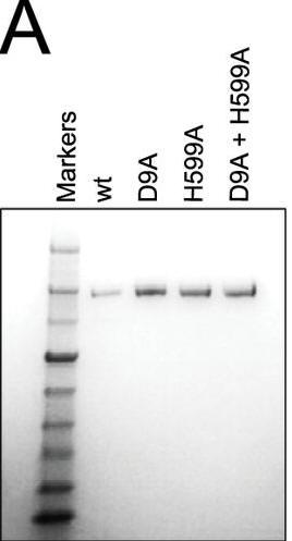 CRISPR_Fig1A