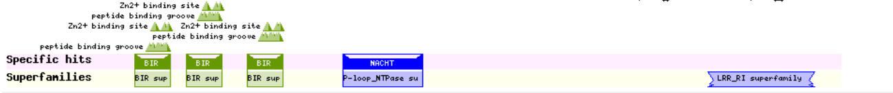 NAIP1_domain