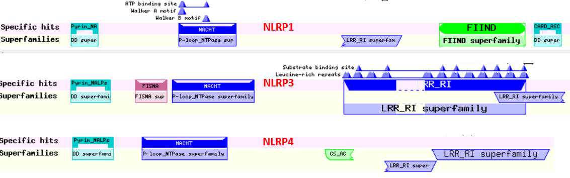 NLRP domain structure