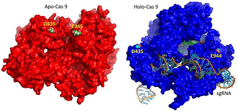 combo CRISPR Surf Conf Change