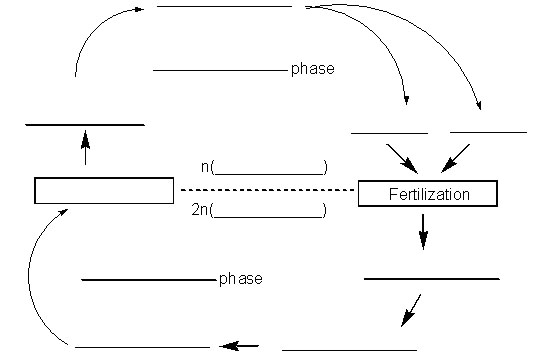 generalized cell blank diagram